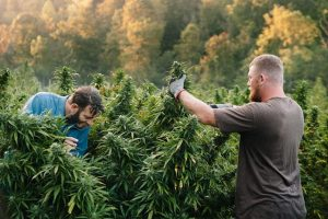 STATE NEWS: New Hemp Project Manufacturer to Create 271 Jobs