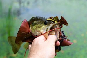 National Bass Fishing Championship Coming to Paducah