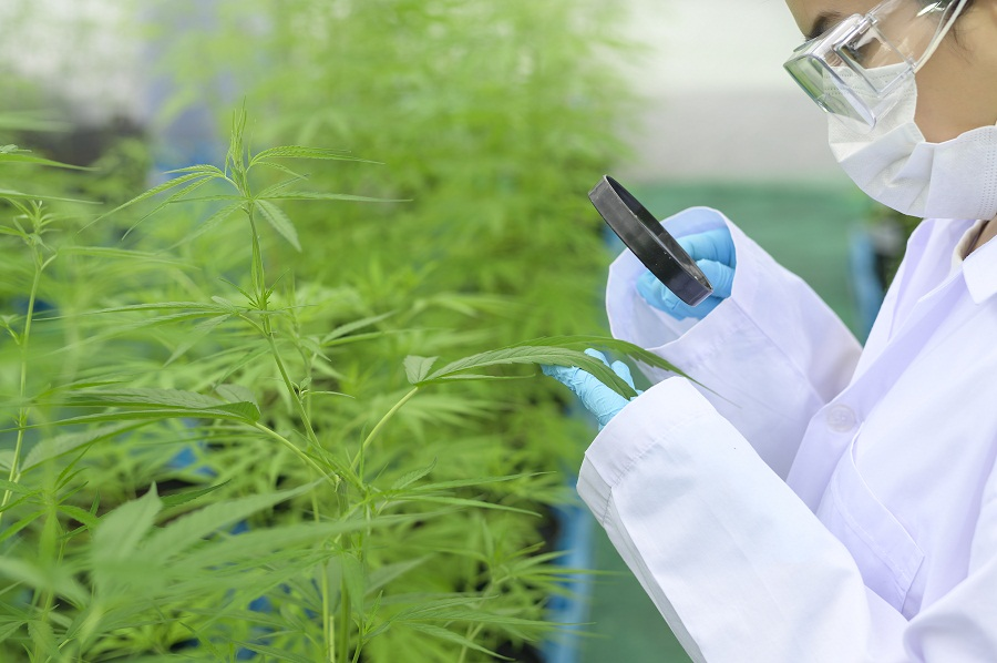 UK Scientists Outline Hemp Research Needs